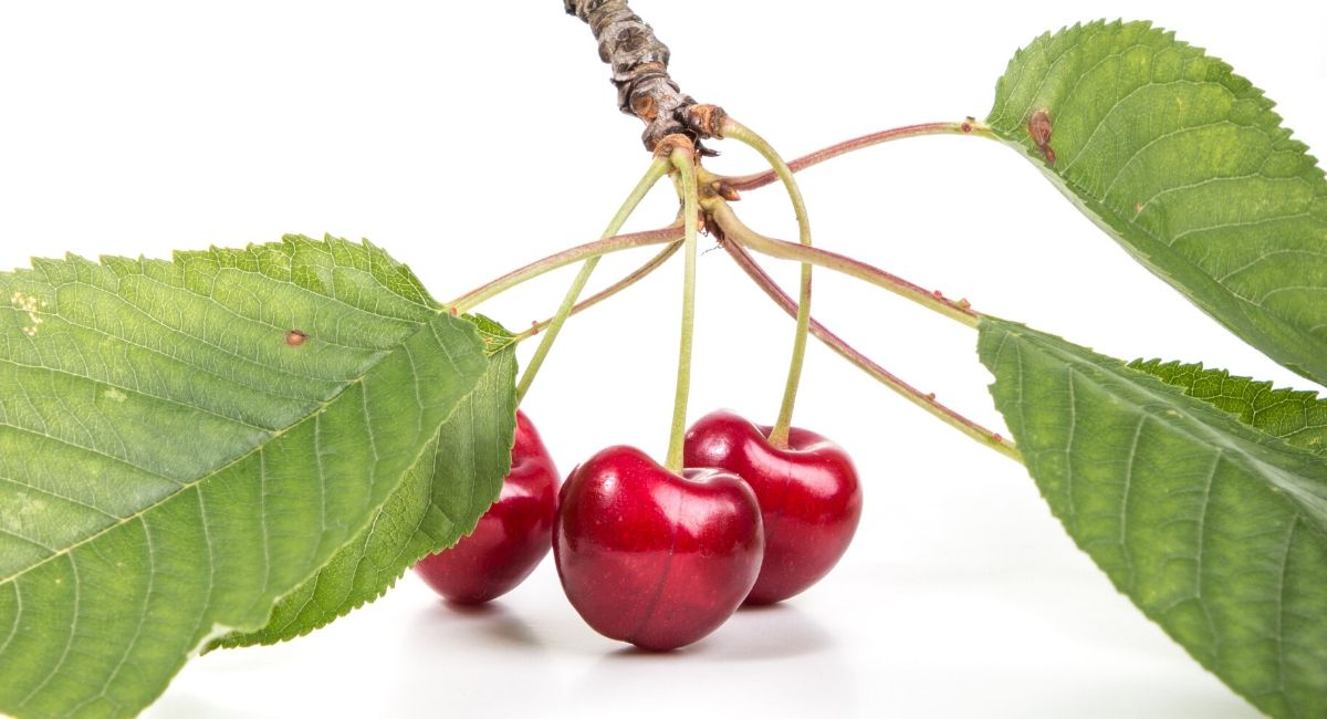 7 Beneficios de las cerezas para la salud