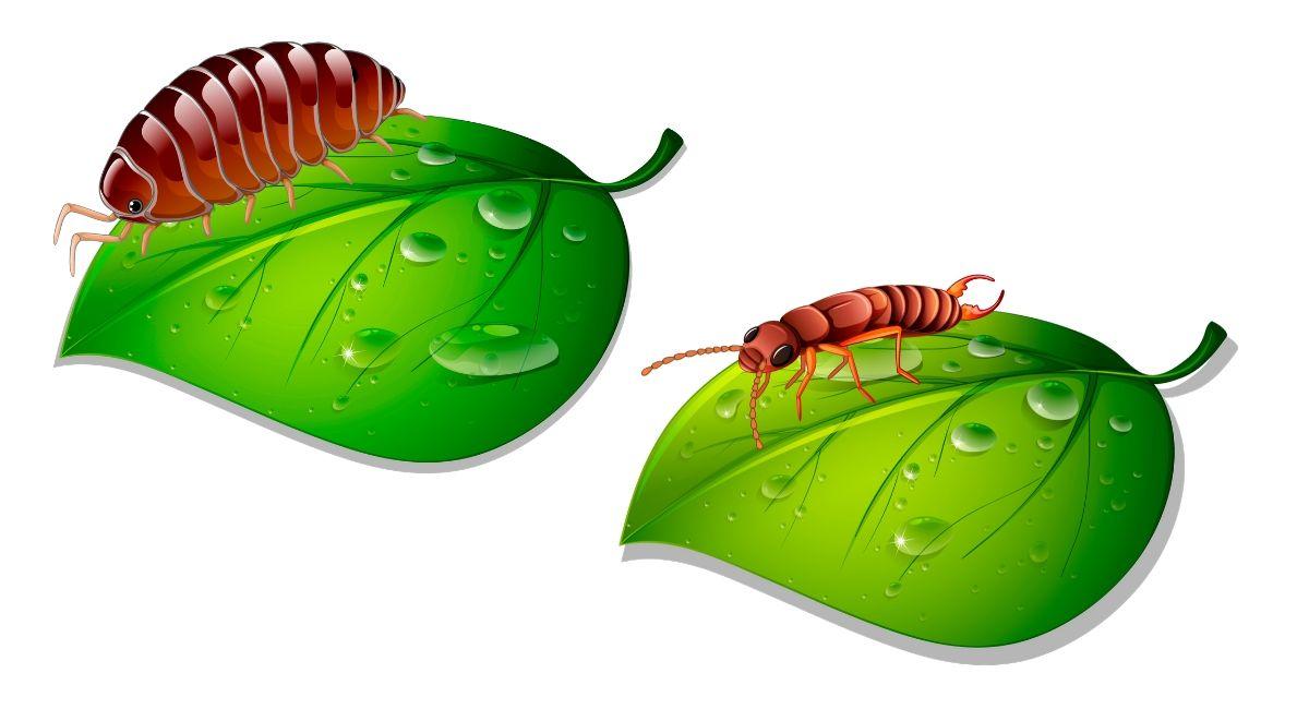 Cómo deshacerse de las plagas en las plantas de interior fácil y naturalmente