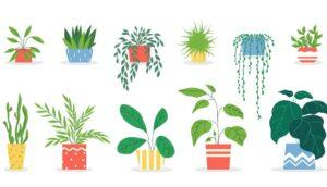 11 plantas de la suerte según el Feng Shui y dónde ponerlas en su casa