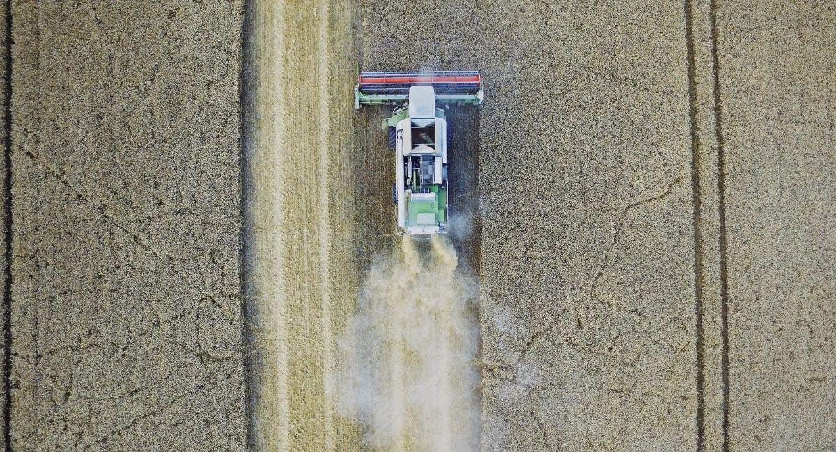 5 formas de evitar los pesticidas en los alimentos