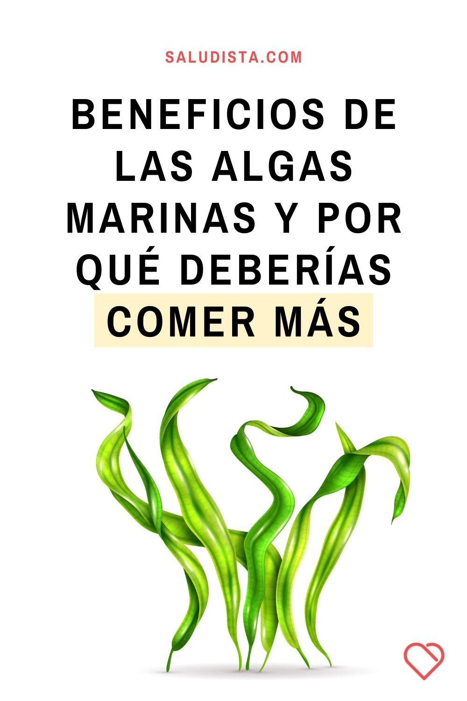 Beneficios de las algas marinas y por qué deberías comer más