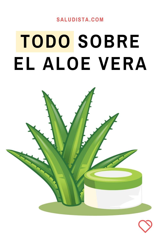 Todo sobre el Aloe Vera