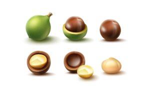 5 Propiedades de las nueces de macadamia
