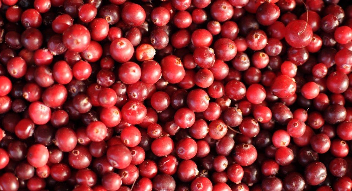 5 Propiedades de los arándanos rojos