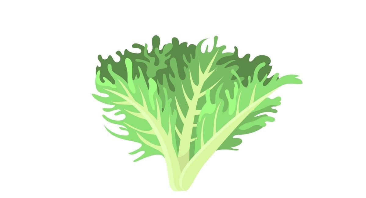 7 Propiedades del kale para la salud