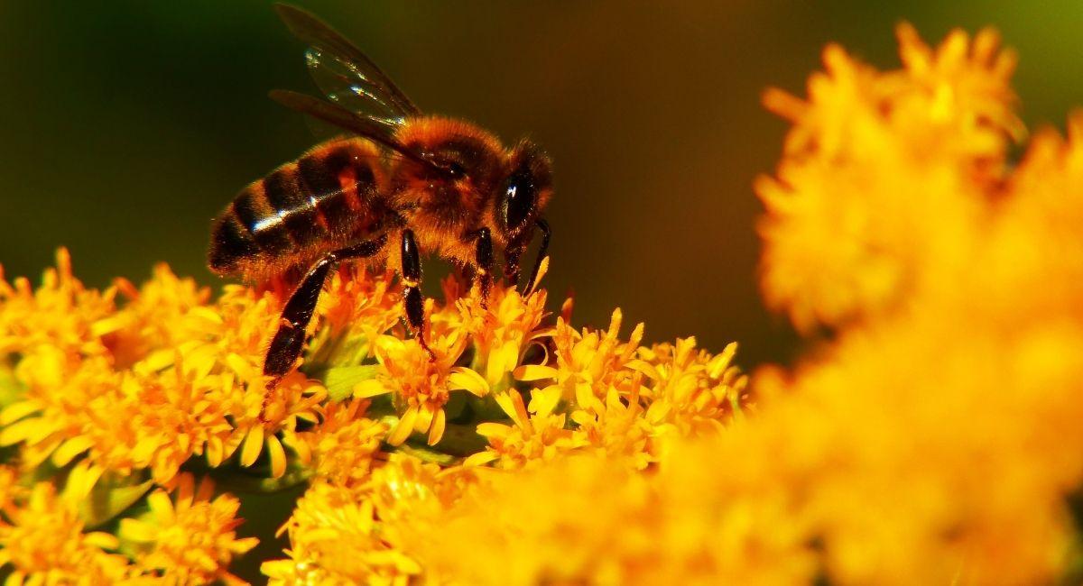 4 Propiedades del pólen para la salud