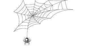 11 cosas que significan soñar con arañas, según un experto en sueños