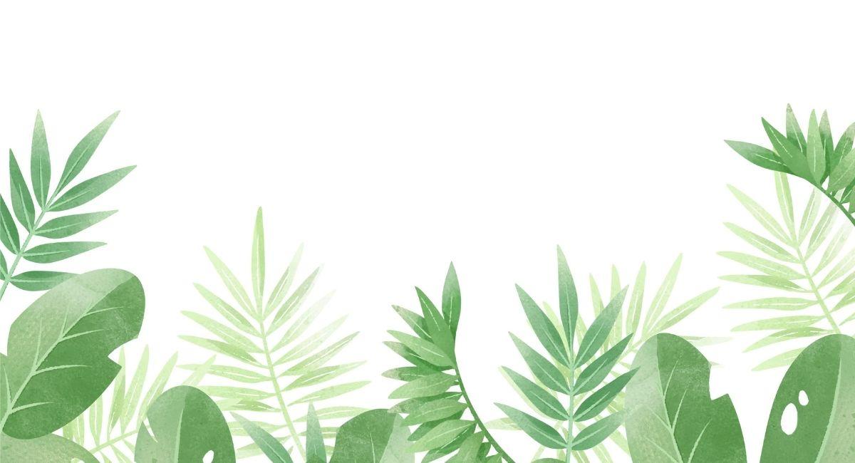 7 Plantas medicinales con las que deberías rodearte