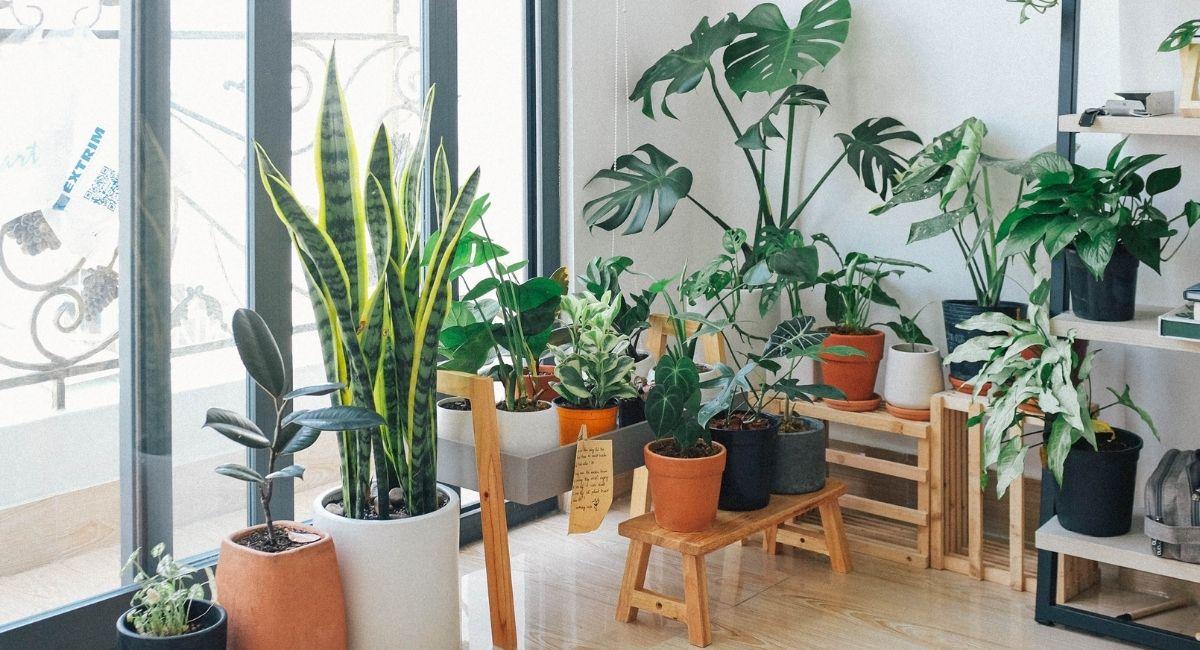 12 Beneficios para la salud de las plantas de interior