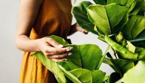 12 Beneficios de las plantas de interior