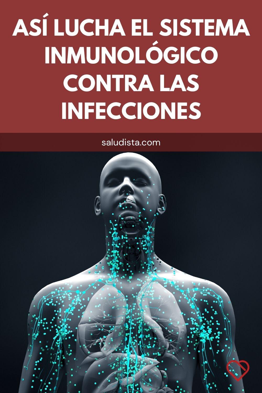 Así lucha el sistema inmunológico contra las infecciones