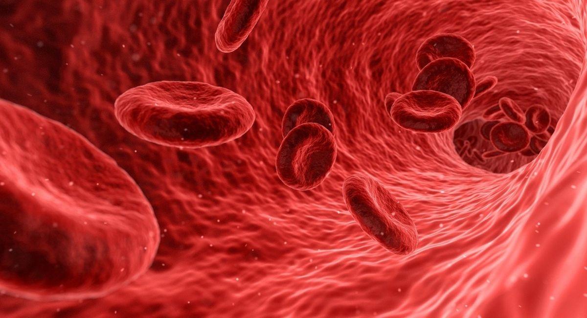 ¿Cómo puedes averiguar tu tipo de sangre?
