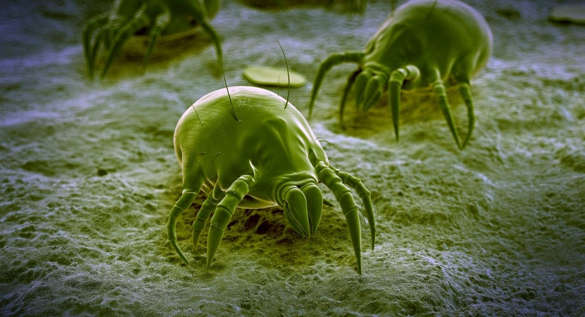 13 Organismos que viven en el cuerpo humano
