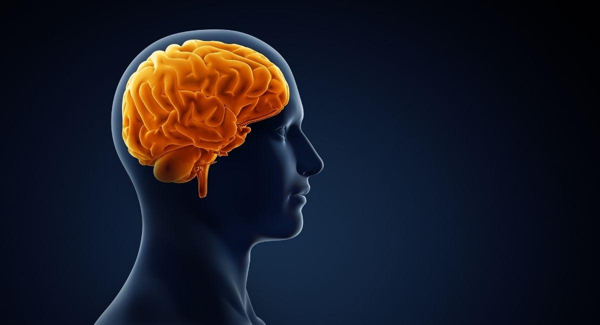 Existen 5 tipos de cerebros diferentes: Esto es lo que dice tu tipo sobre ti
