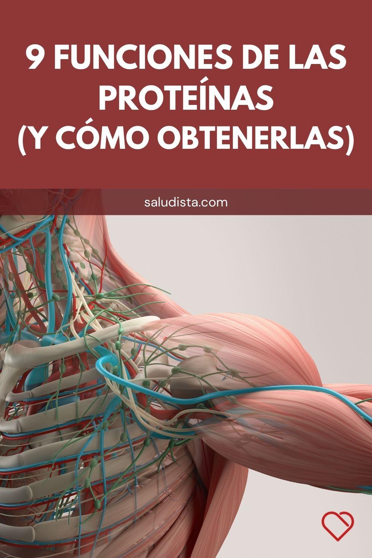 9 Funciones de las proteínas (y cómo obtenerlas)