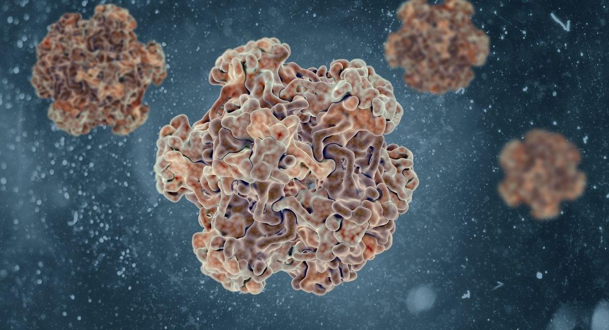 Todo sobre el virus del papiloma humano